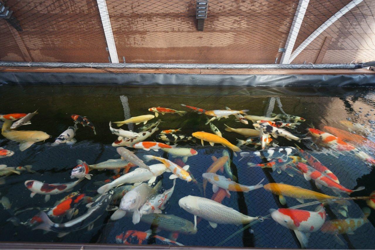 Portes ouvertes 2014 – Design jardins at Bassin à Koi